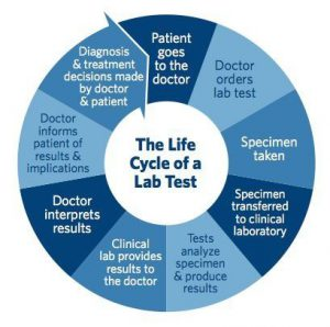 The lfe cycle of a lab tests